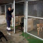 Cómo Abrir Una Perrera Para Criar Animales